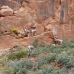 Zion Park animaux