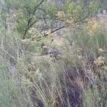 Zion Park faune